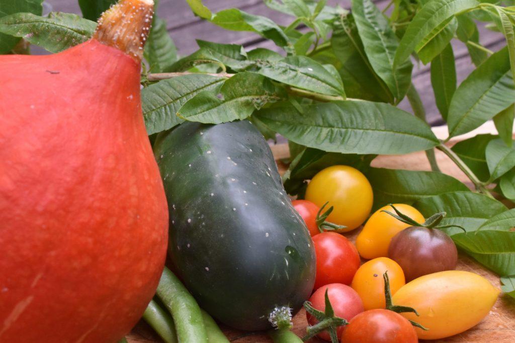 Légumes de saison pour pickels par l'académie de la Fermentation